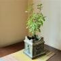 Tulsi Plant Benefits